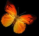 mariposa_netwoods_paginas_Web